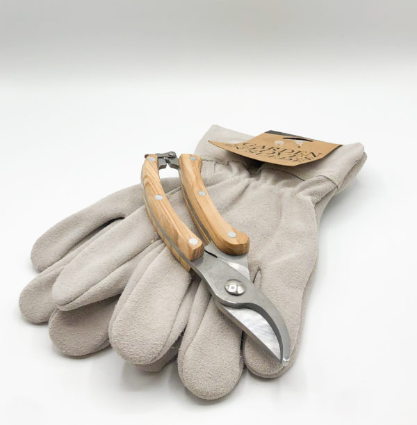 gloves and secateurs